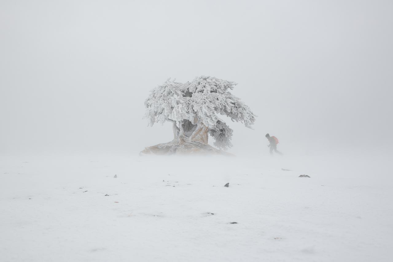 Ein Film über unsere ältesten Lebensgenossen auf der Erde: die Bäume |©Patagonia